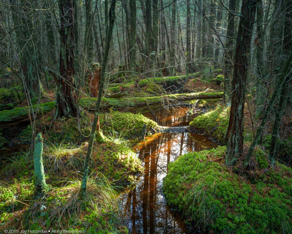 12-31-2019-cedar-swamp.jpg