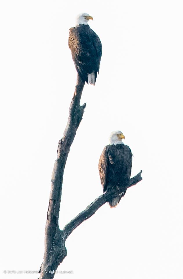 2019-02-07_eagles.jpg