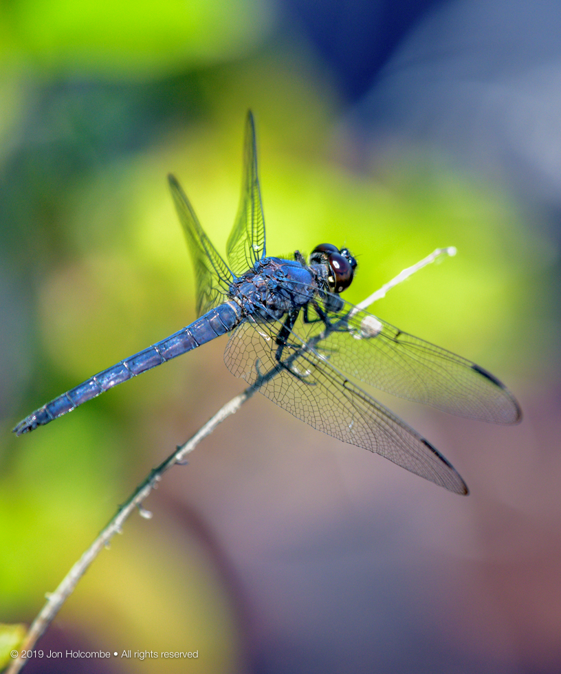 2019-06-11_dragonfly.jpg