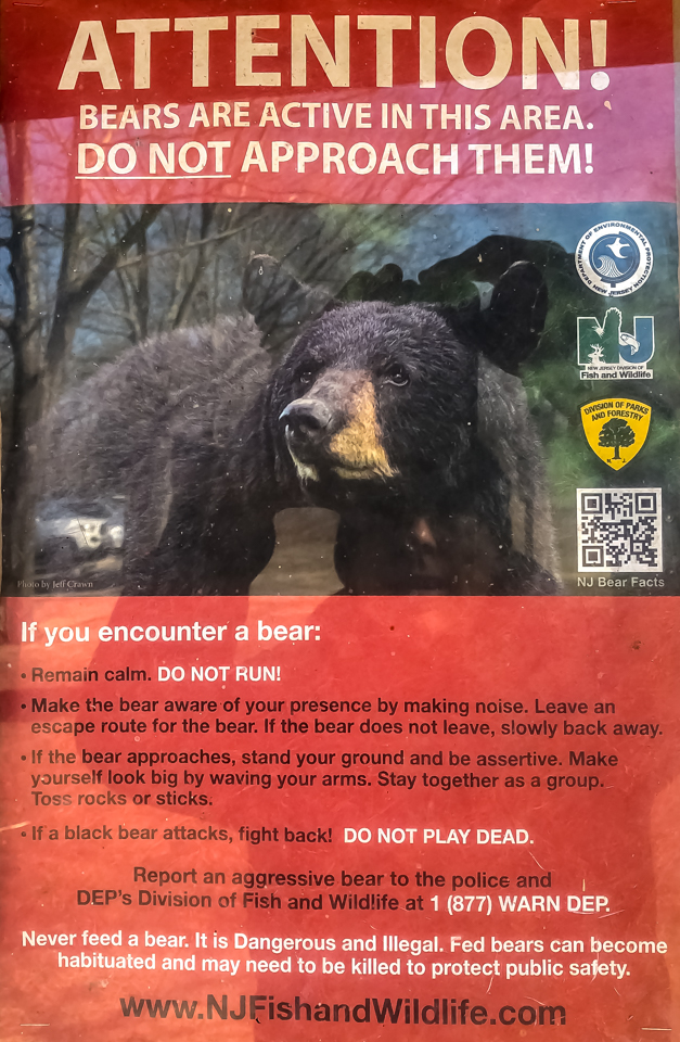 2019_02_19_bear.jpg