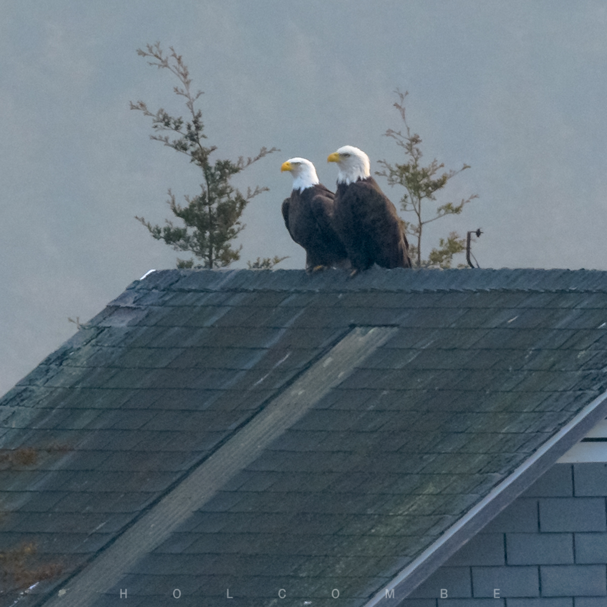 2021-01-15_two_eagles.jpg