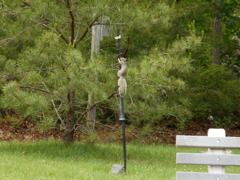 birdfeeder-squirrel.jpg