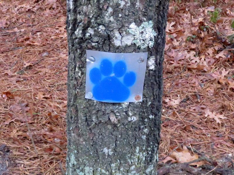 Blue_paw_marker.jpg