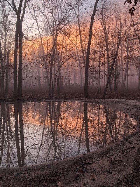 foggy morning 12-28-19 (Small).jpg