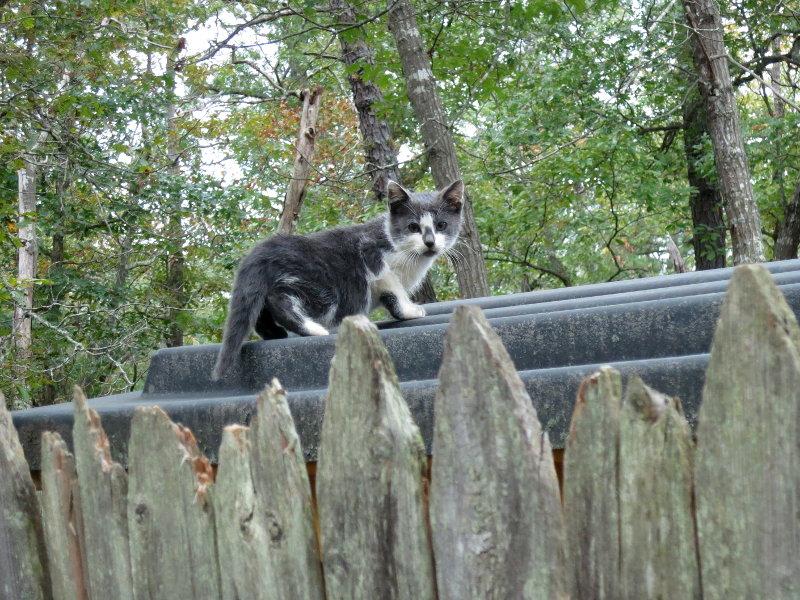 forest-kitten.jpg
