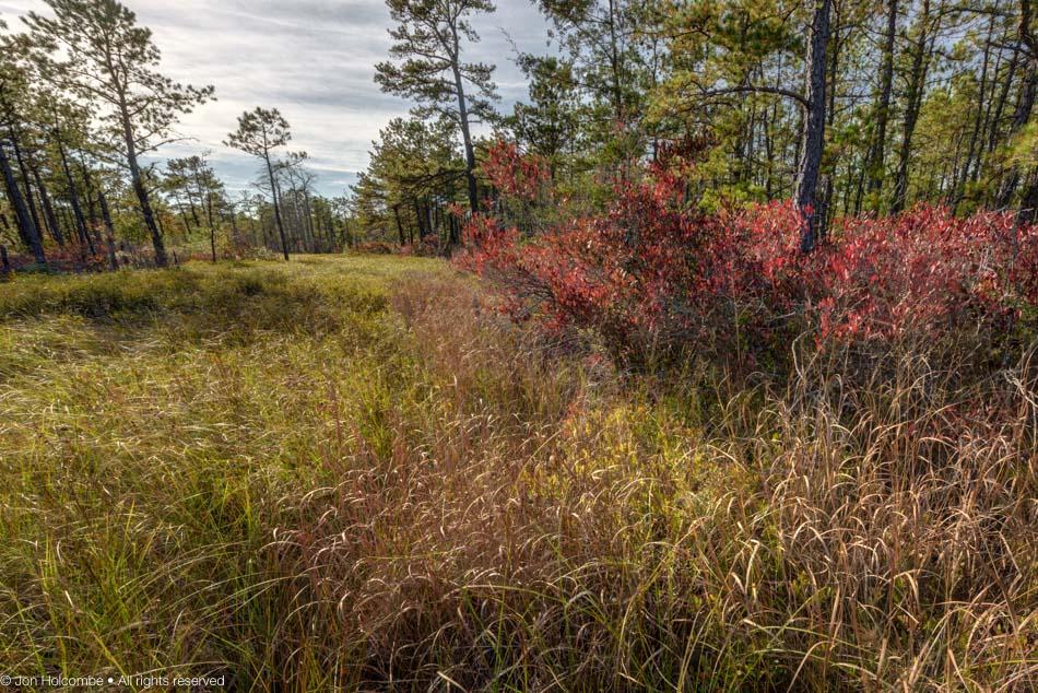 oct26_meadow.jpg