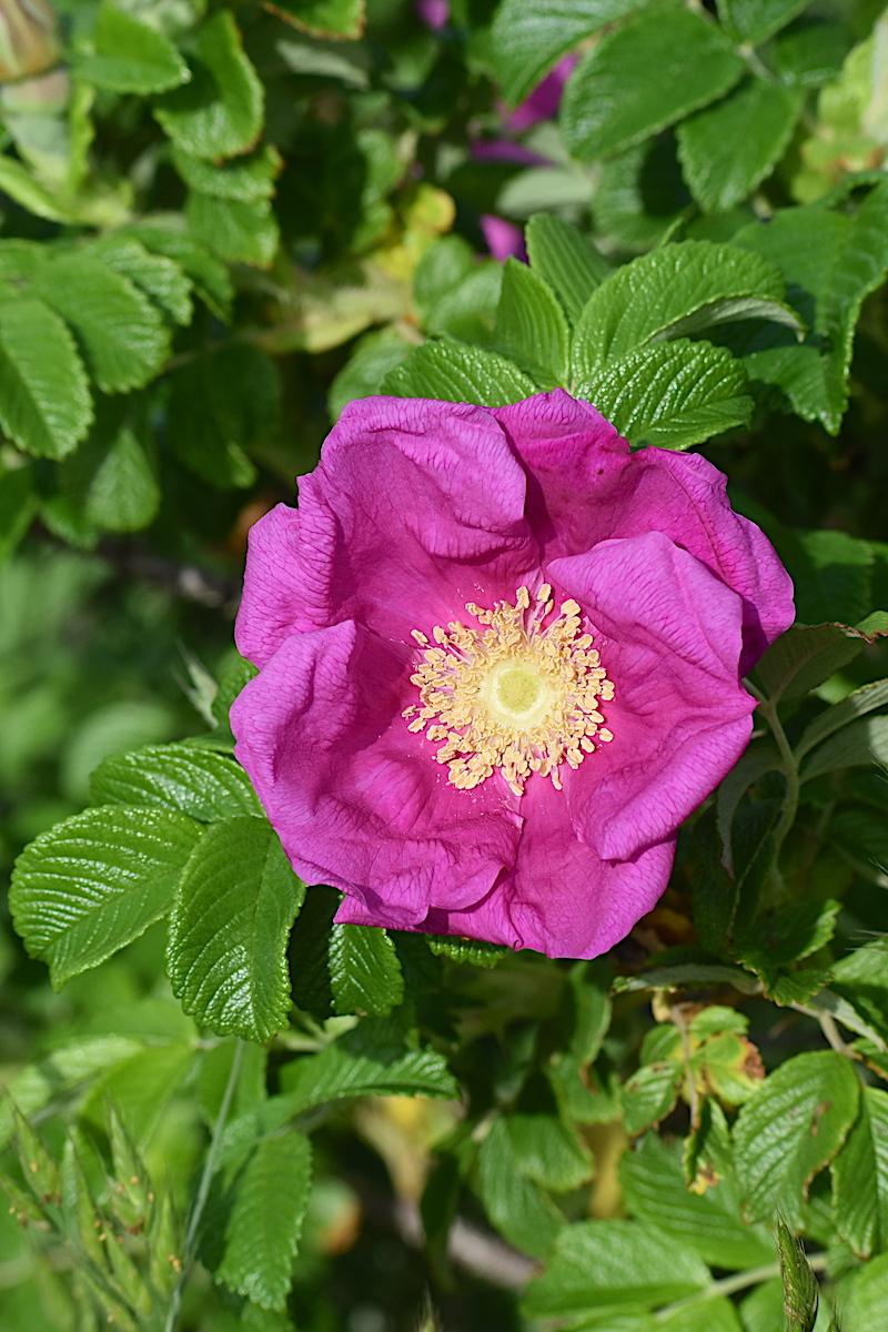 pbforum_northbrig_pink_1200.jpeg
