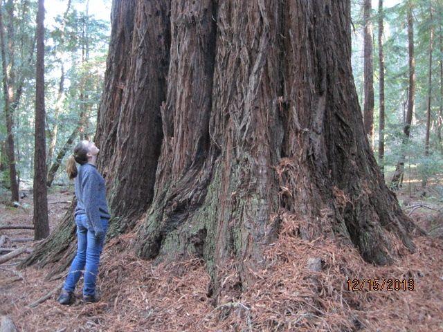 Redwood Grove Alexis.jpg