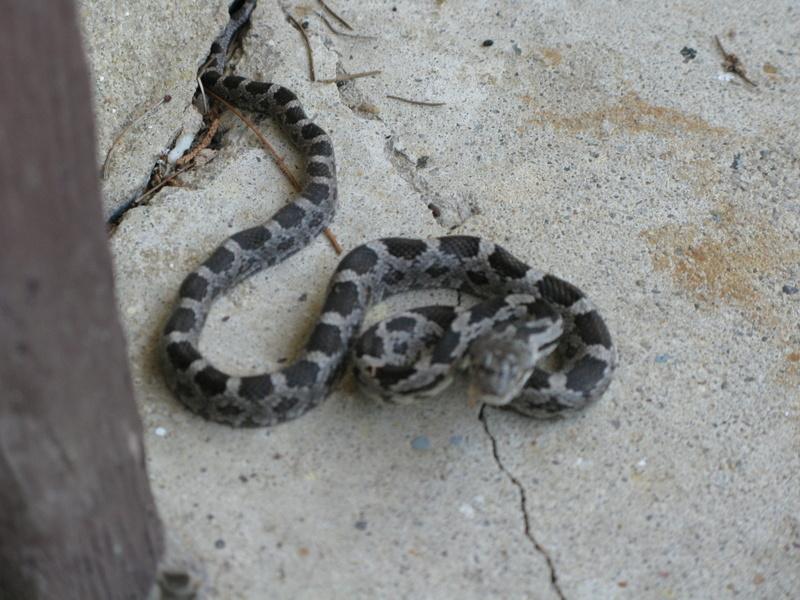 SnakeInGarage 006.JPG