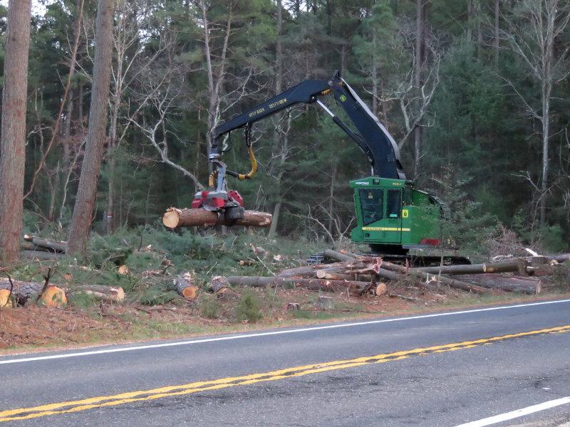 treeclearing1.jpg