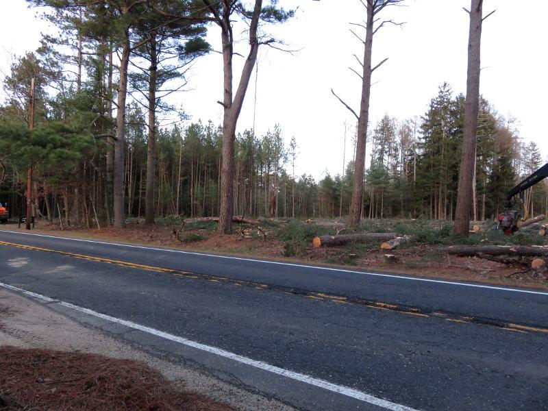 treeclearing2.jpg