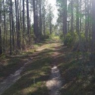 Longleaf Piney